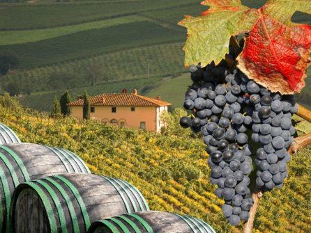 Виды итальянских вин. Лучшие вина Рима
